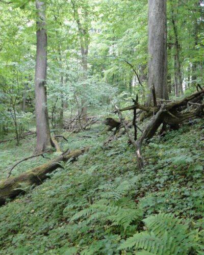 Obrożyska2 Rezerwat