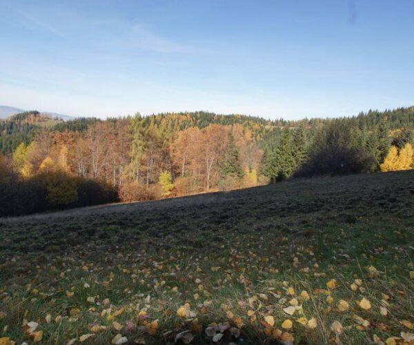 Szlakiem Leśnych1