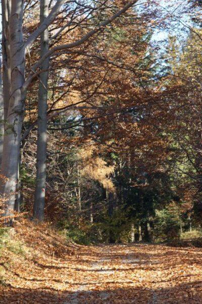 Szlakiem Leśnych2